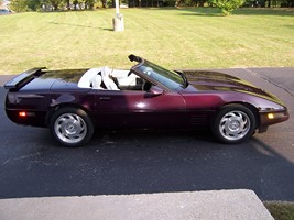 1993 Black Rose White Interior Corvette Images
